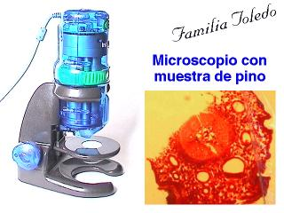Microscope and pine sample